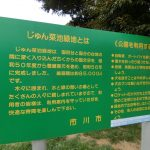 市川市おススメお散歩コース~じゅん菜池緑地~